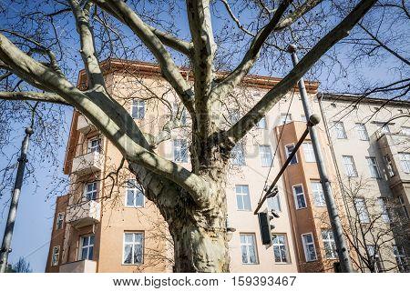 Tree In Front Of An Old House In Berlin Kreuzberg