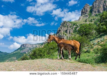 Outdoor breakfast in family of Crimean horses.