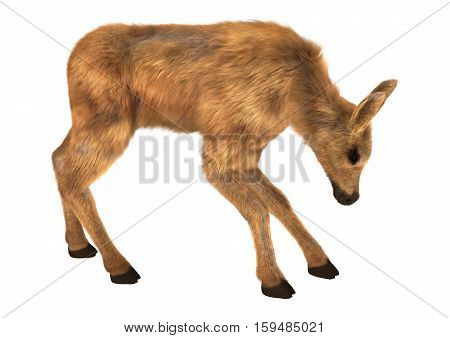 3D rendering of a cute moose calf isolated on white background