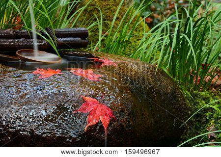 Red maple leaves on a tsukubai washbasin during fall at a temple in Japan