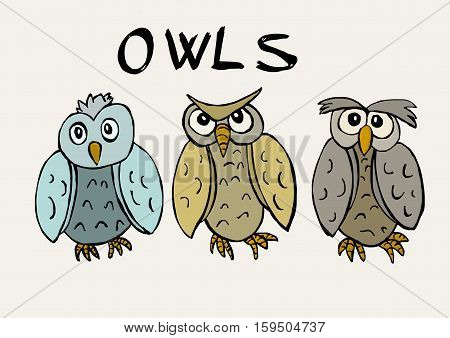 Funny owls colored image of three birds
