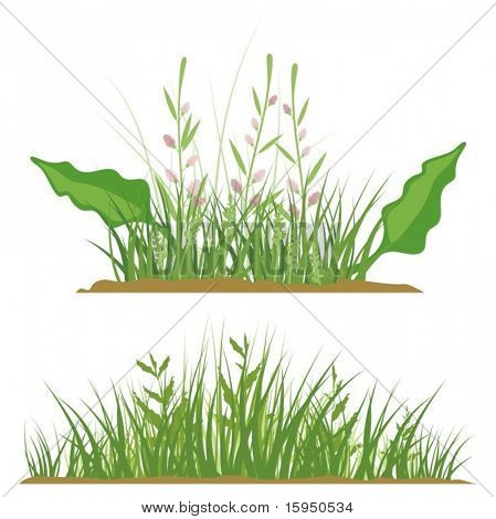 A set of floral grass design elements, vector illustration series.