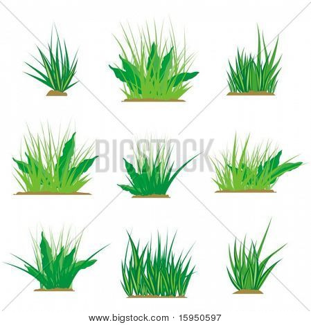 A set of green grass design elements, vector illustration series.