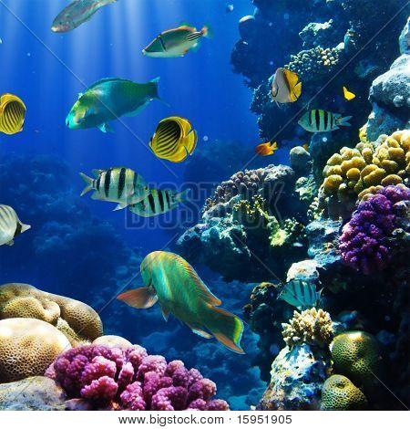 Foto von einem tropischen Fischen auf einem Korallenriff