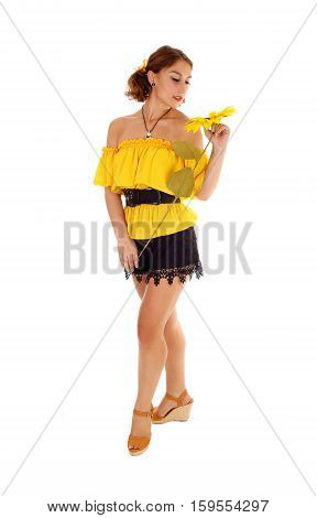 Gorgeous young woman in a yellow blouse and black shorts holding one sunflower standing isolated for white background.