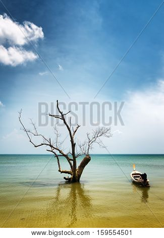Dry Tree And Boat In Water