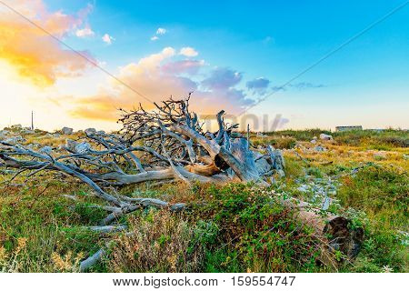 Fallen old tree on a mountain during sunset