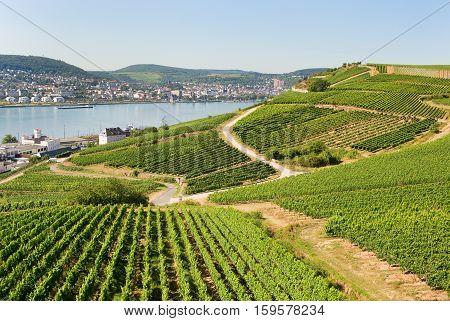 Vineyards In Rudesheim Am Rhein