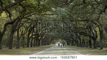Family out for a stroll under canopy of live oaks in the American South
