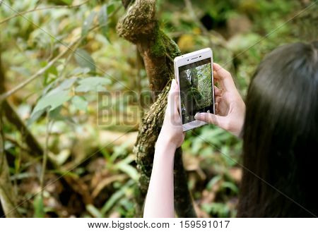 Girl's hand holding mobile phone take a photo. Young woman using smart phone outdoor take a picture. Focus on hand holding cellphone capture texture of tree. Close up of touch screen of smart phone.