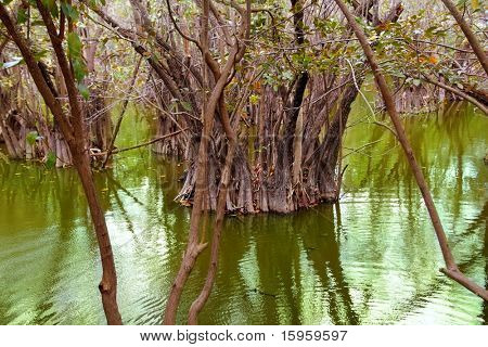 aguada cenote in mexico Mayan Riviera rainforest jungle