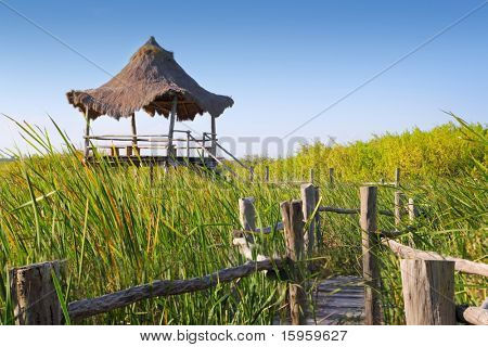 hut palapa in mangrove reed wetlands in mexico