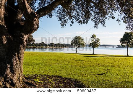 Trees at Ventura Cove Park on Mission Bay in San Diego, California.