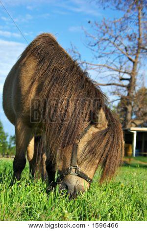 Pferd Gras Essen
