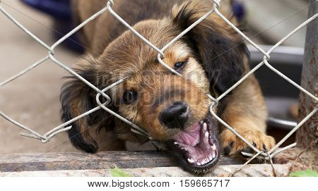 Dog rescue banner - cute puppy looking behind the fence