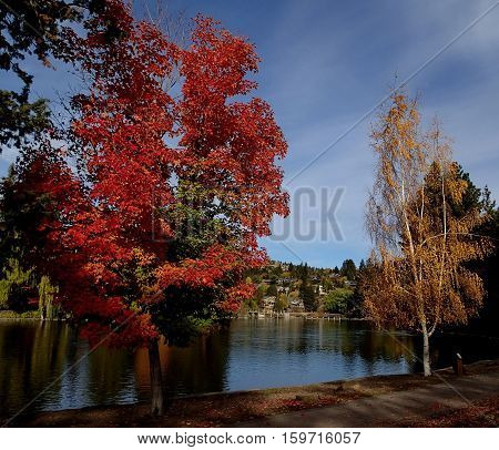 Trees in Drake Park on the banks of theDeschutes River in Bend in Central Oregon turning to their fall colors with brilliant reds greens and golds on a sunny fall afternoon.