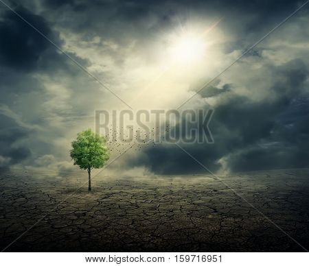 Green tree growing among cracked desert ground with the sun rays casting on it. Life ecology environmental concept and climate change.