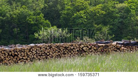 Large wooden stacked for winter in the forest