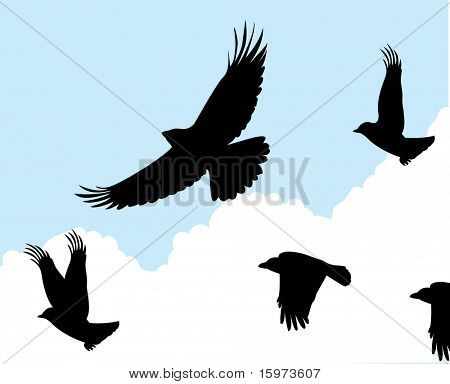birds in flight one vector
