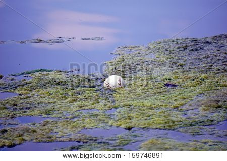 A baseball floats among the algae in a small lake in Joliet, Illinois during May.