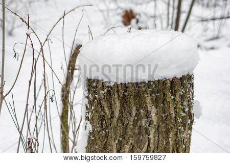 A stump covered with snow in winter forest
