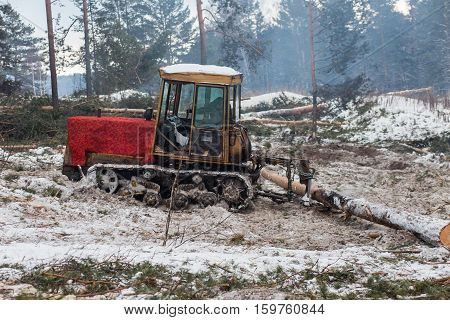 Tractor for export of timber logs unload them.