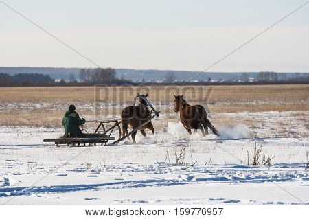 The coachman on the sled across the field driving the horse