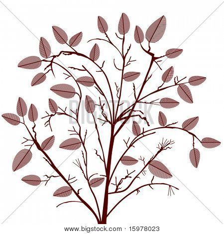 shrub - tree with leaves