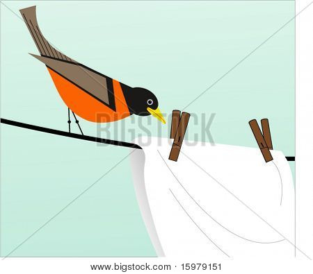 robin on the clothesline