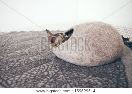 Devon Rex cat is sleeping in felted warm sleeping bed. Cat likes comfortable cat cave made of wool - simple, minimal handmade design. Happy chilling cat. Scandinavian style, natural colors