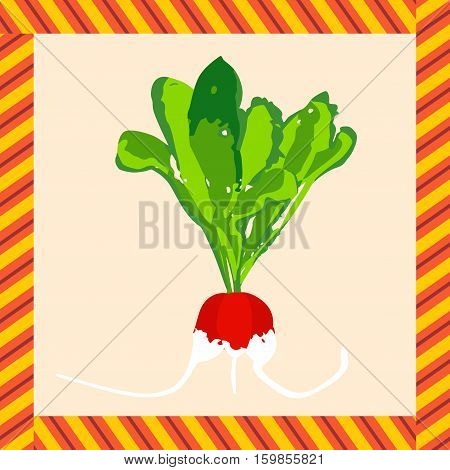 Scalable vectorial image representing a label with radishes, isolated on white.