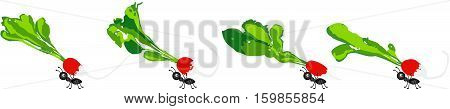 Scalable vectorial image representing a radishes being carried by ants, isolated on white.