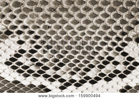 Black and white snake skin texture close up