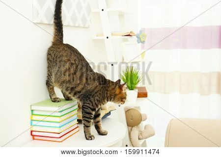 Grey tabby cat on table with books near white wall