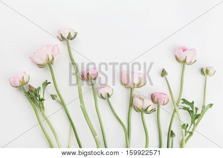 Beautiful spring Ranunculus flowers on white background from above. Floral border. Pastel color. Wedding mockup. Clean space for text. Flat lay style.