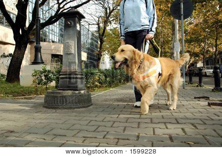 Assistant Dog
