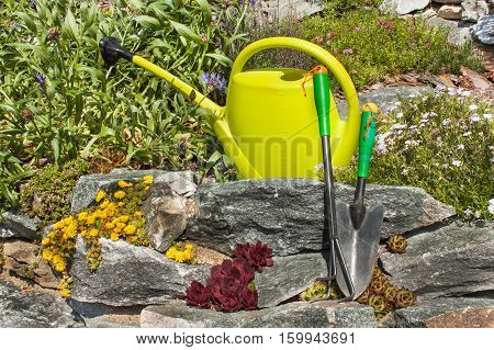 Plastic garden watering can on a blooming rockery. Gardening tools. Ornamental garden.
