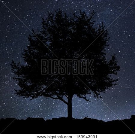 A shape of lonely naked tree on sky with much of stars