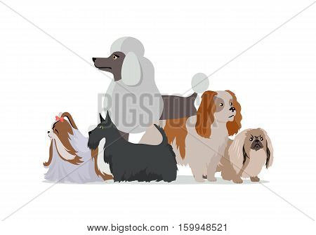 Dog grooming banner. Long haired dog breeds of different size isolated on white background. Pekingese, Shih Tzu, Poodle, Scottish Terrier, Aberdeen Terrier. Dog pet shop banner poster. Vector.