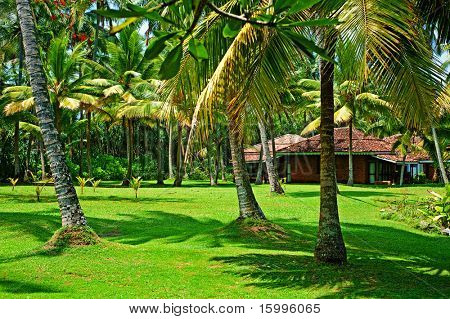 sunny landscape. small exotic house inside of tropical forest