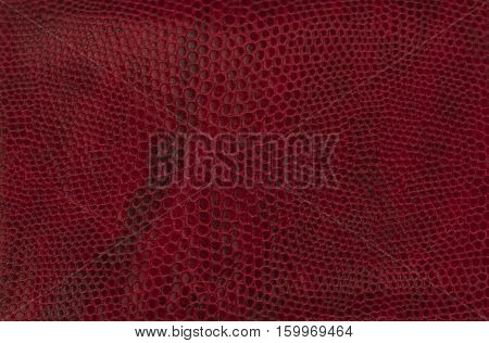red texture reptile skin close-up as background