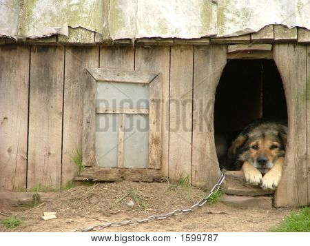 Lonely Dog In His Kennel