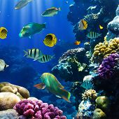 stock photo of coral reefs  - Photo of a tropical Fish on a coral reef - JPG