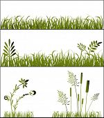 foto of bull rushes  - grasses - JPG