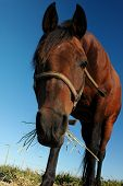 Cute Brown Horse poster