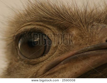 Stink Eye 2