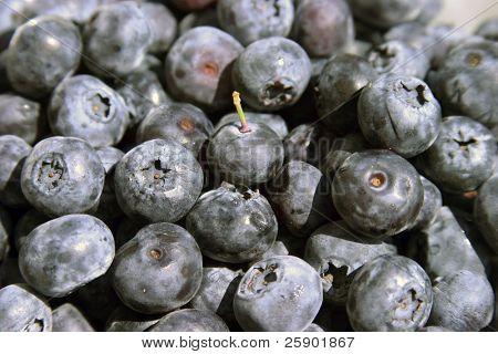 fresh blueberries (V. corymbosum)