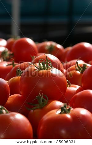a farmers market series fresh picked vine ripened tomatoes