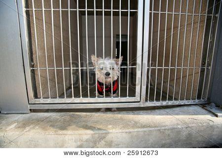 Un perrito blanco triste atascado en un refugio para animales esperando que alguien adoptarlo