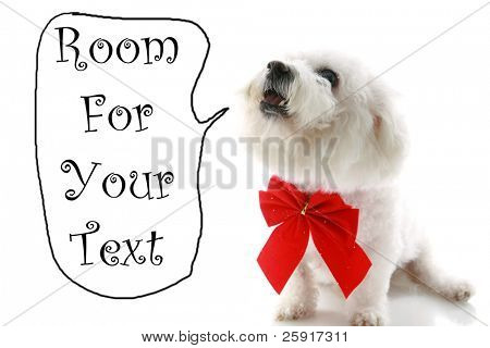 a Pure breed Bichon Frises wears a red bow  with room for your text isolated on white , text is easily replaced with your text